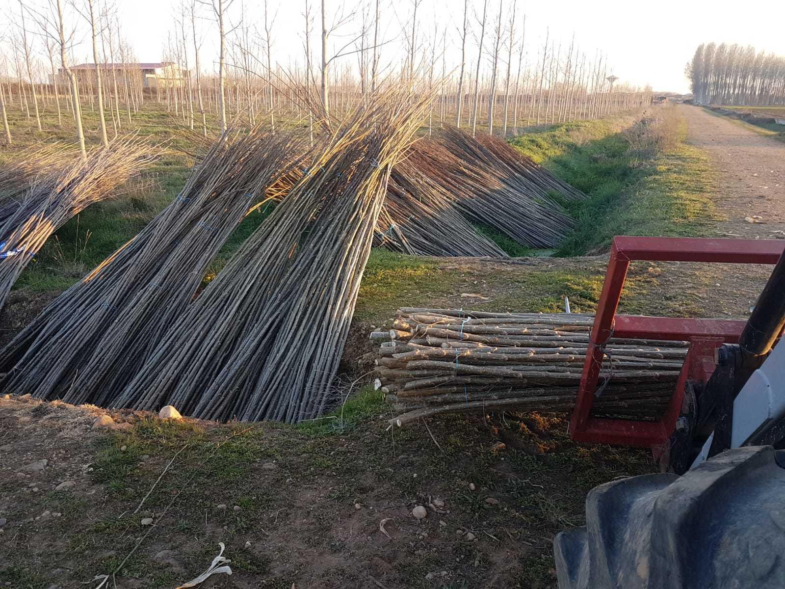 Plantar-chopos-0018.jpg