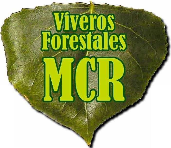 Viveros MCR producción de planta de chopo