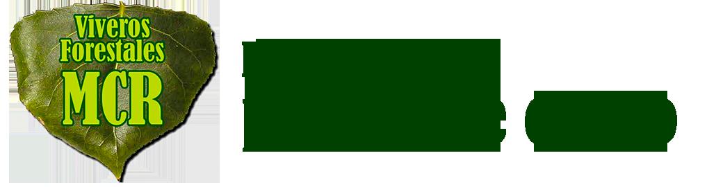 Plantas de Chopo en León