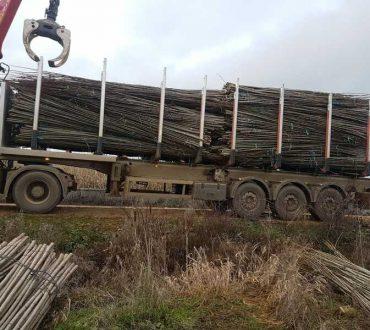 camión cargado de plantones