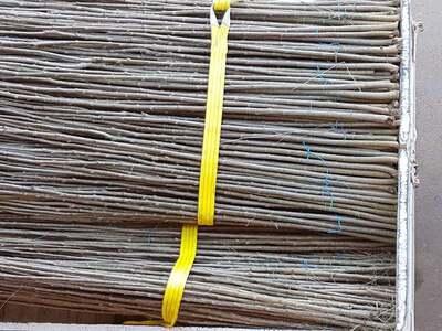 plantar-chopos-0126.jpg