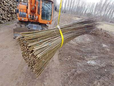 plantar-chopos-0128-1.jpg