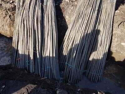 plantar-chopos-0135.jpg